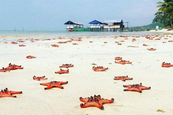 Những con sao biển luôn thu hút khách ghé đến Rạch Vẹm